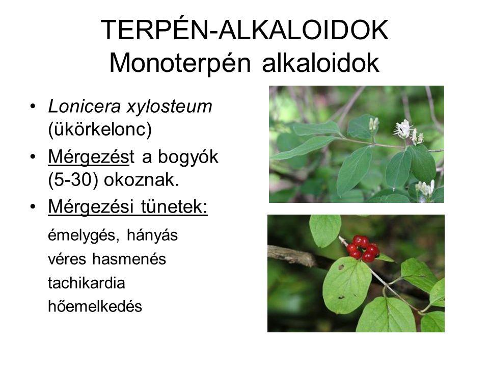 TERPÉN-ALKALOIDOK Monoterpén alkaloidok Lonicera xylosteum (ükörkelonc) Mérgezést a bogyók (5-30) okoznak. Mérgezési tünetek: émelygés, hányás véres h