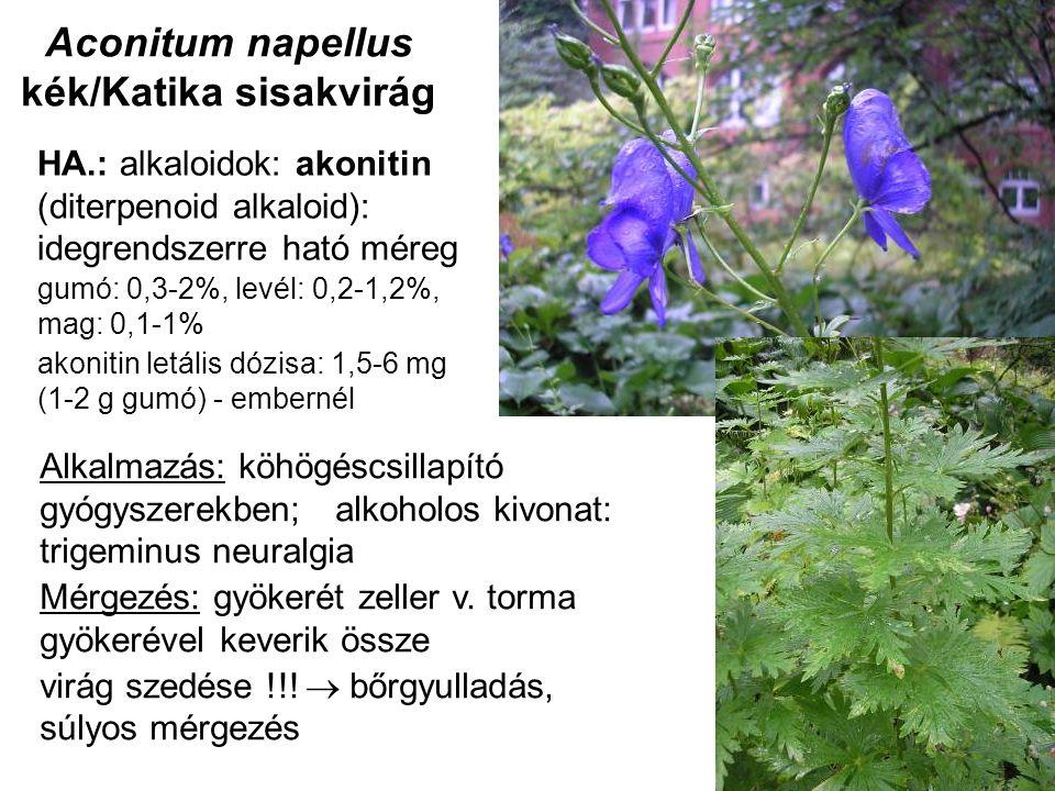 Aconitum napellus kék/Katika sisakvirág HA.: alkaloidok: akonitin (diterpenoid alkaloid): idegrendszerre ható méreg gumó: 0,3-2%, levél: 0,2-1,2%, mag: 0,1-1% akonitin letális dózisa: 1,5-6 mg (1-2 g gumó) - embernél Alkalmazás: köhögéscsillapító gyógyszerekben; alkoholos kivonat: trigeminus neuralgia Mérgezés: gyökerét zeller v.