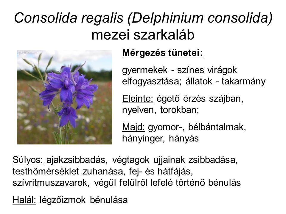Consolida regalis (Delphinium consolida) mezei szarkaláb Mérgezés tünetei: gyermekek - színes virágok elfogyasztása; állatok - takarmány Eleinte: égető érzés szájban, nyelven, torokban; Majd: gyomor-, bélbántalmak, hányinger, hányás Súlyos: ajakzsibbadás, végtagok ujjainak zsibbadása, testhőmérséklet zuhanása, fej- és hátfájás, szívritmuszavarok, végül felülről lefelé történő bénulás Halál: légzőizmok bénulása