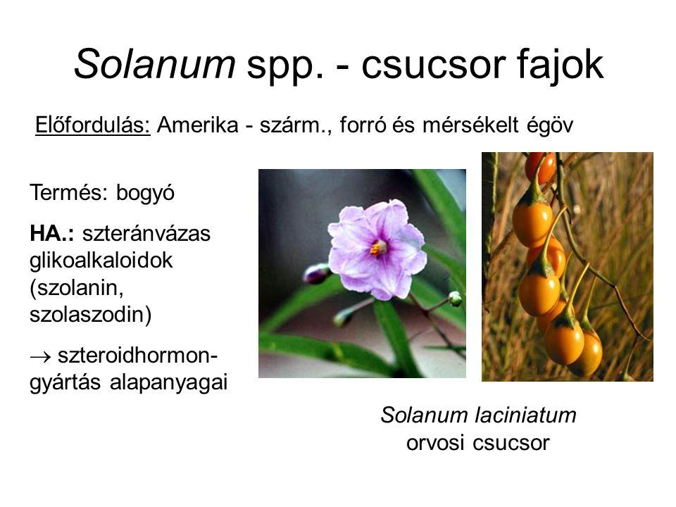 Solanum spp. - csucsor fajok Termés: bogyó HA.: szteránvázas glikoalkaloidok (szolanin, szolaszodin)  szteroidhormon- gyártás alapanyagai Solanum lac