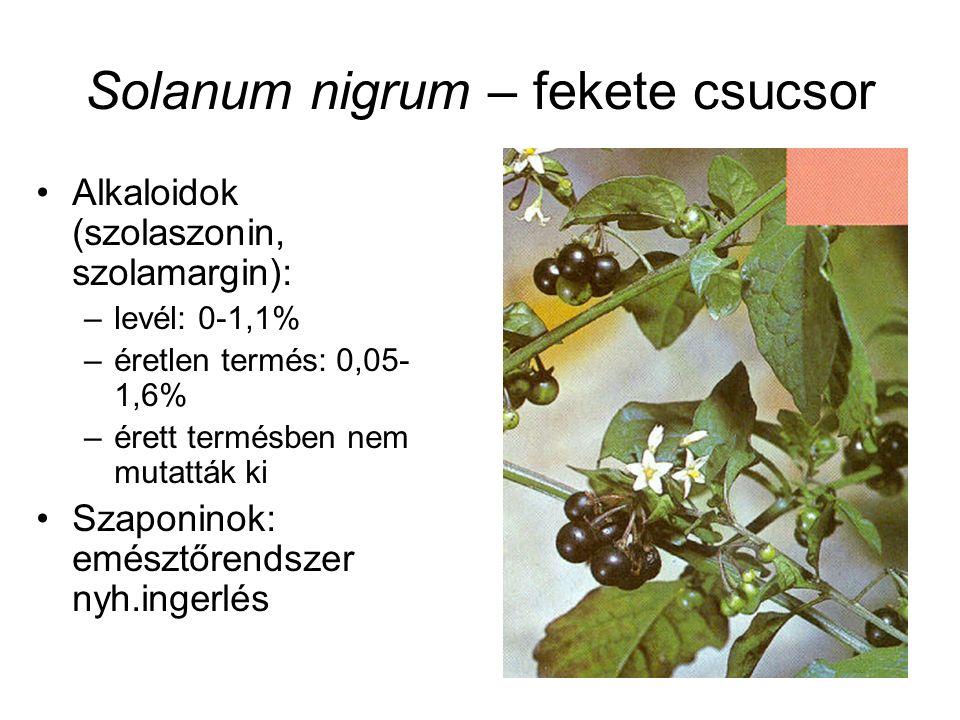 Solanum nigrum – fekete csucsor Alkaloidok (szolaszonin, szolamargin): –levél: 0-1,1% –éretlen termés: 0,05- 1,6% –érett termésben nem mutatták ki Szaponinok: emésztőrendszer nyh.ingerlés