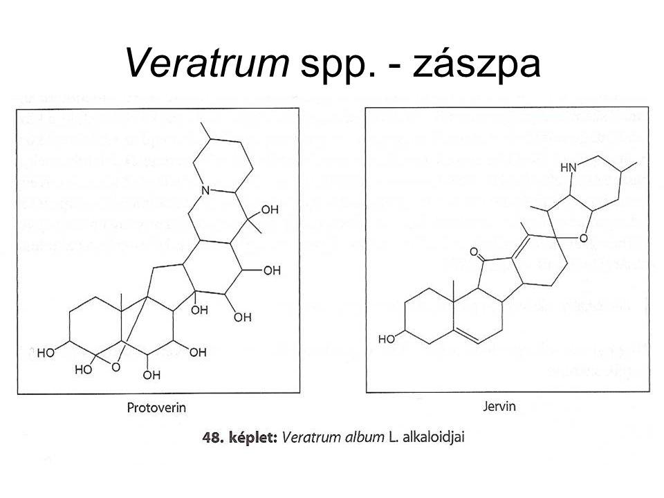 Veratrum spp. - zászpa