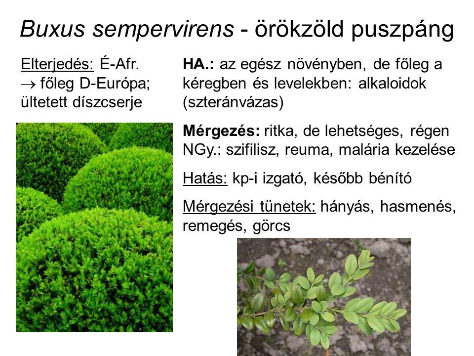 Buxus sempervirens - örökzöld puszpáng HA.: az egész növényben, de főleg a kéregben és levelekben: alkaloidok (szteránvázas) Mérgezés: ritka, de lehetséges, régen NGy.: szifilisz, reuma, malária kezelése Hatás: kp-i izgató, később bénító Mérgezési tünetek: hányás, hasmenés, remegés, görcs Elterjedés: É-Afr.