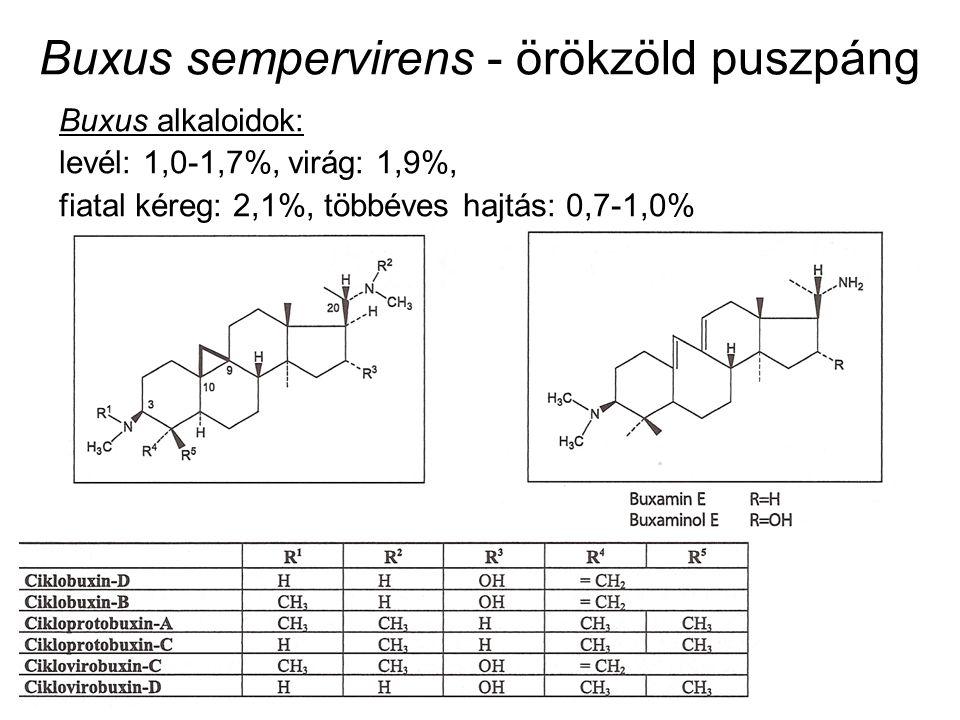 Buxus sempervirens - örökzöld puszpáng Buxus alkaloidok: levél: 1,0-1,7%, virág: 1,9%, fiatal kéreg: 2,1%, többéves hajtás: 0,7-1,0%