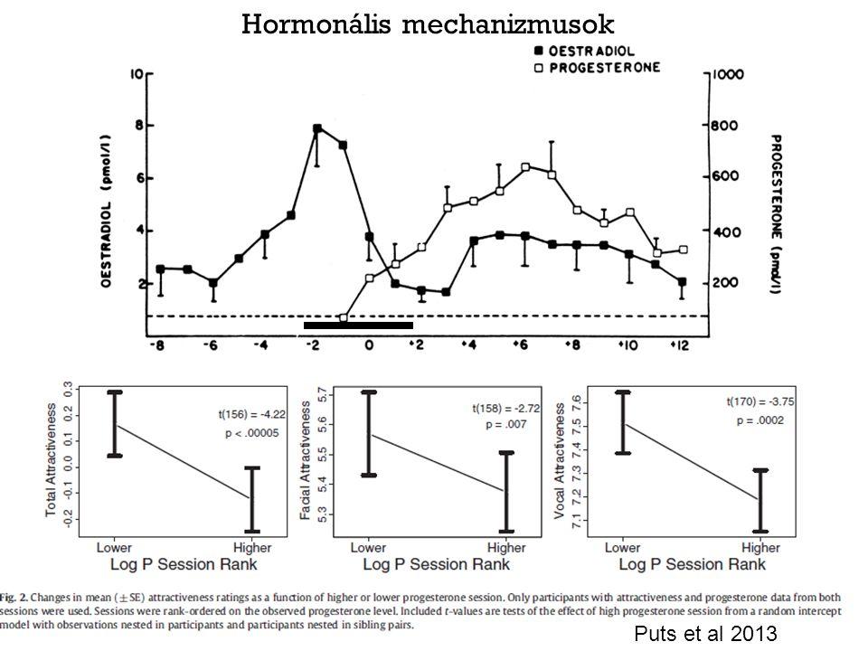 Hormonális mechanizmusok Puts et al 2013