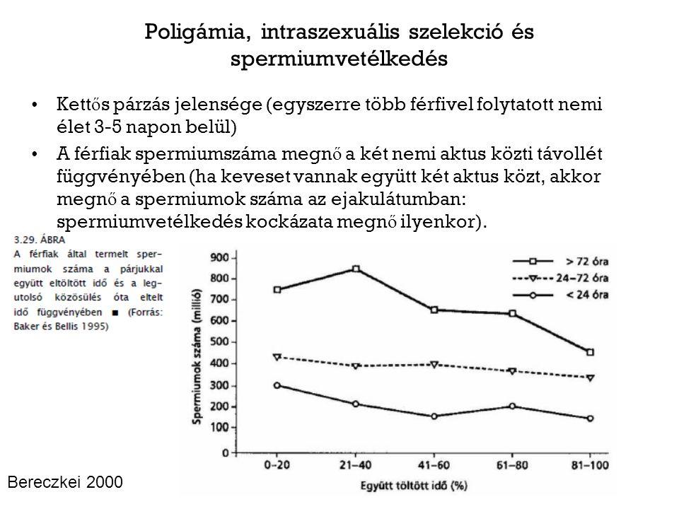 Poligámia, intraszexuális szelekció és spermiumvetélkedés Kett ő s párzás jelensége (egyszerre több férfivel folytatott nemi élet 3-5 napon belül) A férfiak spermiumszáma megn ő a két nemi aktus közti távollét függvényében (ha keveset vannak együtt két aktus közt, akkor megn ő a spermiumok száma az ejakulátumban: spermiumvetélkedés kockázata megn ő ilyenkor).