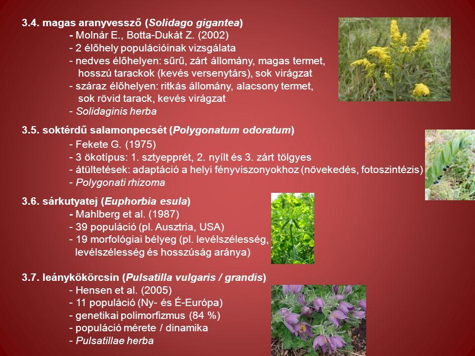 3.4. magas aranyvessző (Solidago gigantea) - Molnár E., Botta-Dukát Z.