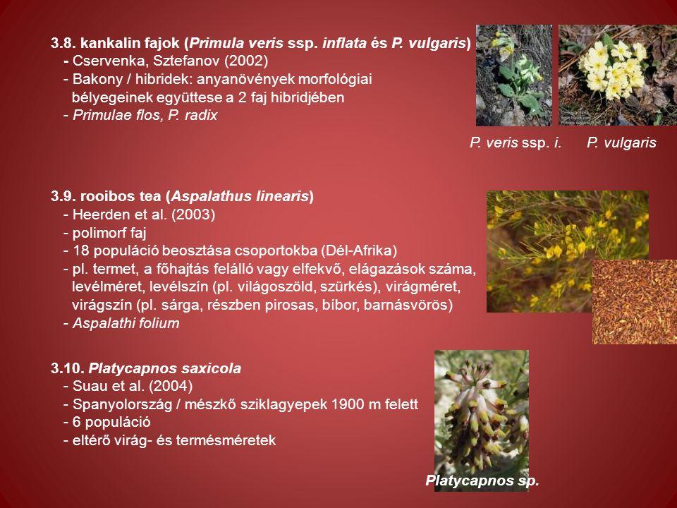 3.8. kankalin fajok (Primula veris ssp. inflata és P.