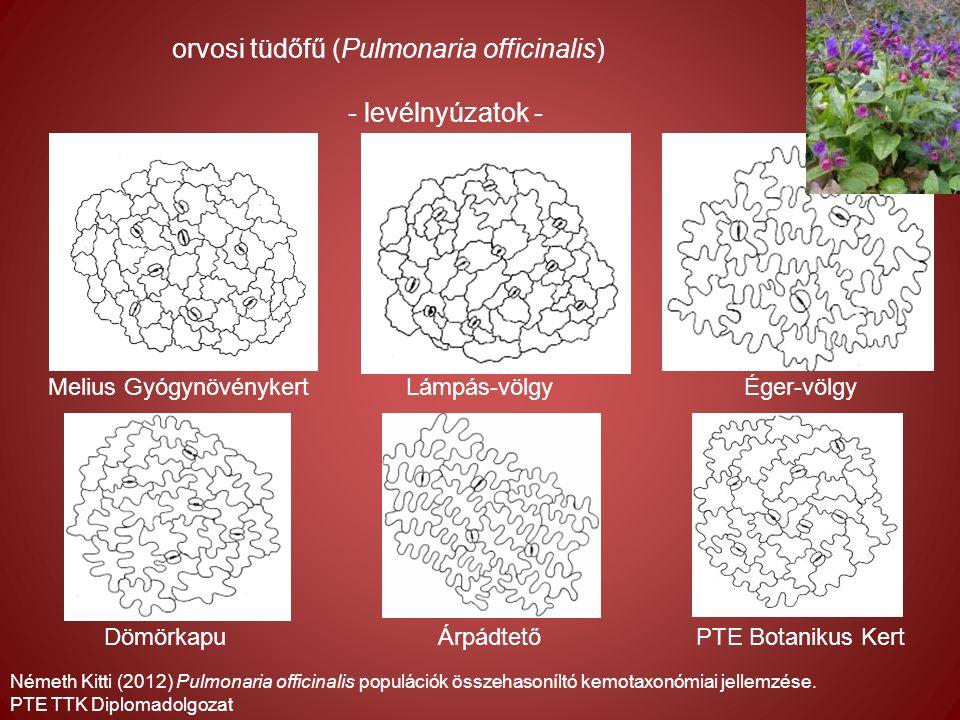 Melius GyógynövénykertLámpás-völgy PTE Botanikus Kert Éger-völgy DömörkapuÁrpádtető Németh Kitti (2012) Pulmonaria officinalis populációk összehasoníltó kemotaxonómiai jellemzése.