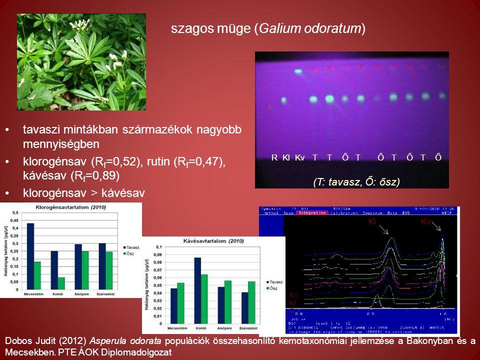 tavaszi mintákban származékok nagyobb mennyiségben klorogénsav (R f =0,52), rutin (R f =0,47), kávésav (R f =0,89) klorogénsav > kávésav R Kl Kv T T Ő T Ő T Ő T Ő Kv Kl R KlKv szagos müge (Galium odoratum) Dobos Judit (2012) Asperula odorata populációk összehasonlító kemotaxonómiai jellemzése a Bakonyban és a Mecsekben.