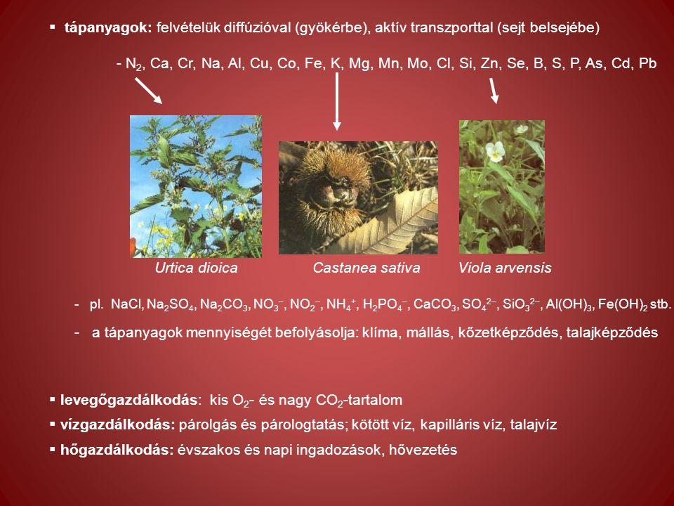 kávésav klorogénsav hiperozid rutin Tubes - levél Tubes - szár Zsebe domb - levél Zsebe domb - szár Gyergyák Kinga (2012) Echium vulgare populációk összehasoníltó kemotaxonómiai jellemzése.