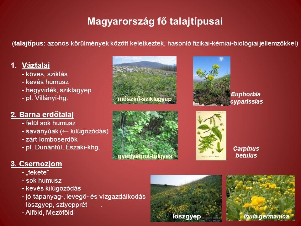 Magyarország fő talajtípusai (talajtípus: azonos körülmények között keletkeztek, hasonló fizikai-kémiai-biológiai jellemzőkkel) 1.Váztalaj - köves, sziklás - kevés humusz - hegyvidék, sziklagyep - pl.
