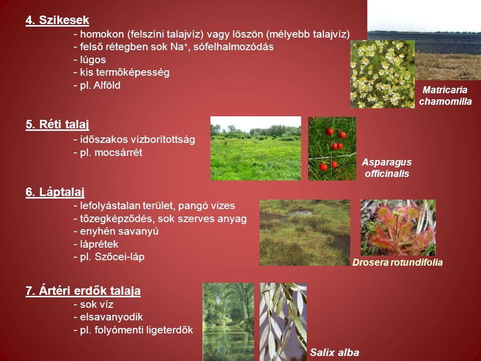 4.szurokfű (Origanum vulgare) - Veres et al. (2002) - populációnként + évjárati hatásra pl.