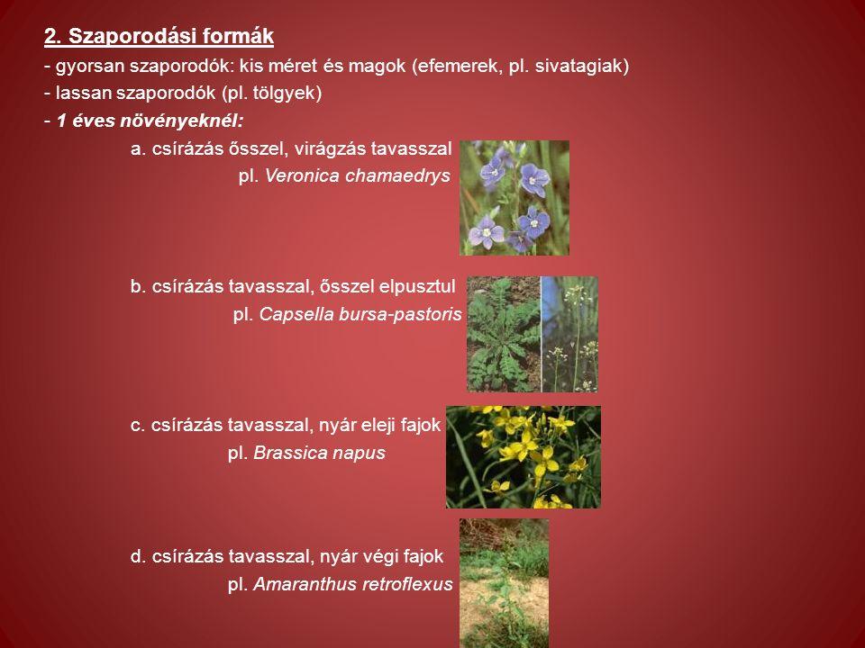 2. Szaporodási formák - gyorsan szaporodók: kis méret és magok (efemerek, pl.