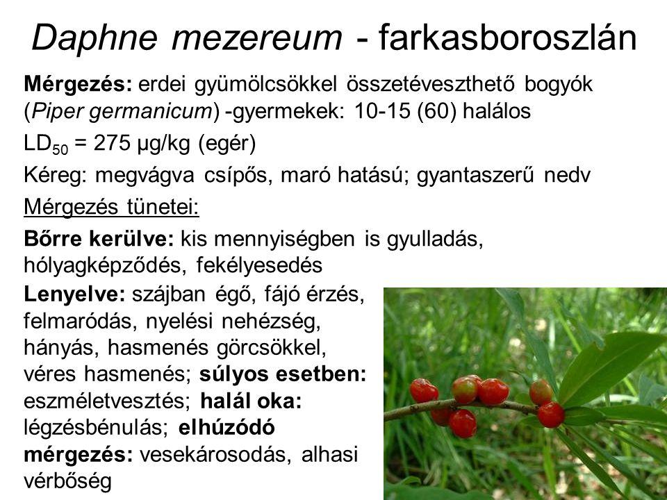Daphne mezereum - farkasboroszlán Mérgezés: erdei gyümölcsökkel összetéveszthető bogyók (Piper germanicum) -gyermekek: 10-15 (60) halálos LD 50 = 275 μg/kg (egér) Kéreg: megvágva csípős, maró hatású; gyantaszerű nedv Mérgezés tünetei: Bőrre kerülve: kis mennyiségben is gyulladás, hólyagképződés, fekélyesedés Lenyelve: szájban égő, fájó érzés, felmaródás, nyelési nehézség, hányás, hasmenés görcsökkel, véres hasmenés; súlyos esetben: eszméletvesztés; halál oka: légzésbénulás; elhúzódó mérgezés: vesekárosodás, alhasi vérbőség