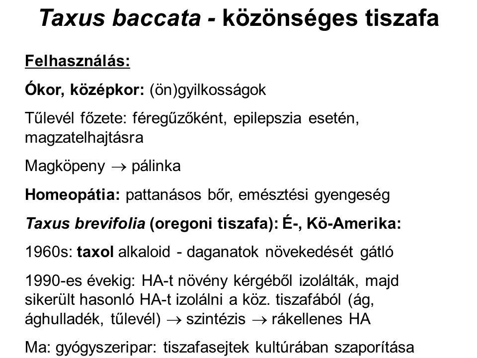 Taxus baccata - közönséges tiszafa Felhasználás: Ókor, középkor: (ön)gyilkosságok Tűlevél főzete: féregűzőként, epilepszia esetén, magzatelhajtásra Magköpeny  pálinka Homeopátia: pattanásos bőr, emésztési gyengeség Taxus brevifolia (oregoni tiszafa): É-, Kö-Amerika: 1960s: taxol alkaloid - daganatok növekedését gátló 1990-es évekig: HA-t növény kérgéből izolálták, majd sikerült hasonló HA-t izolálni a köz.