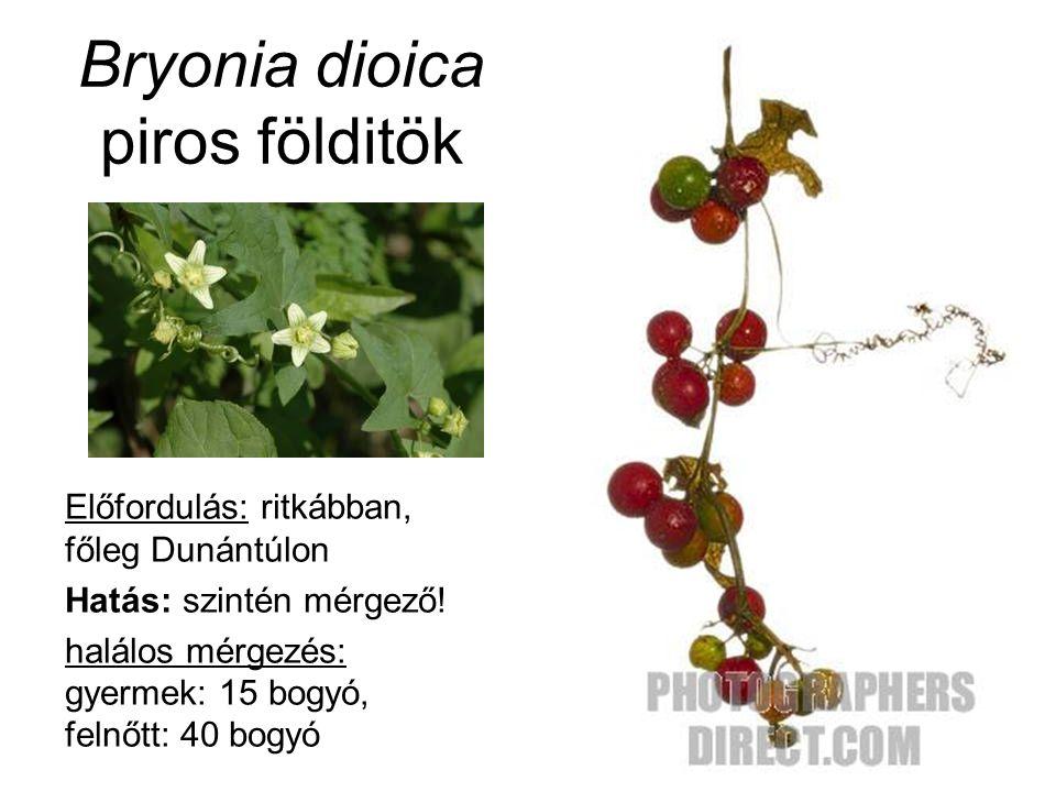 Bryonia dioica piros földitök Előfordulás: ritkábban, főleg Dunántúlon Hatás: szintén mérgező! halálos mérgezés: gyermek: 15 bogyó, felnőtt: 40 bogyó