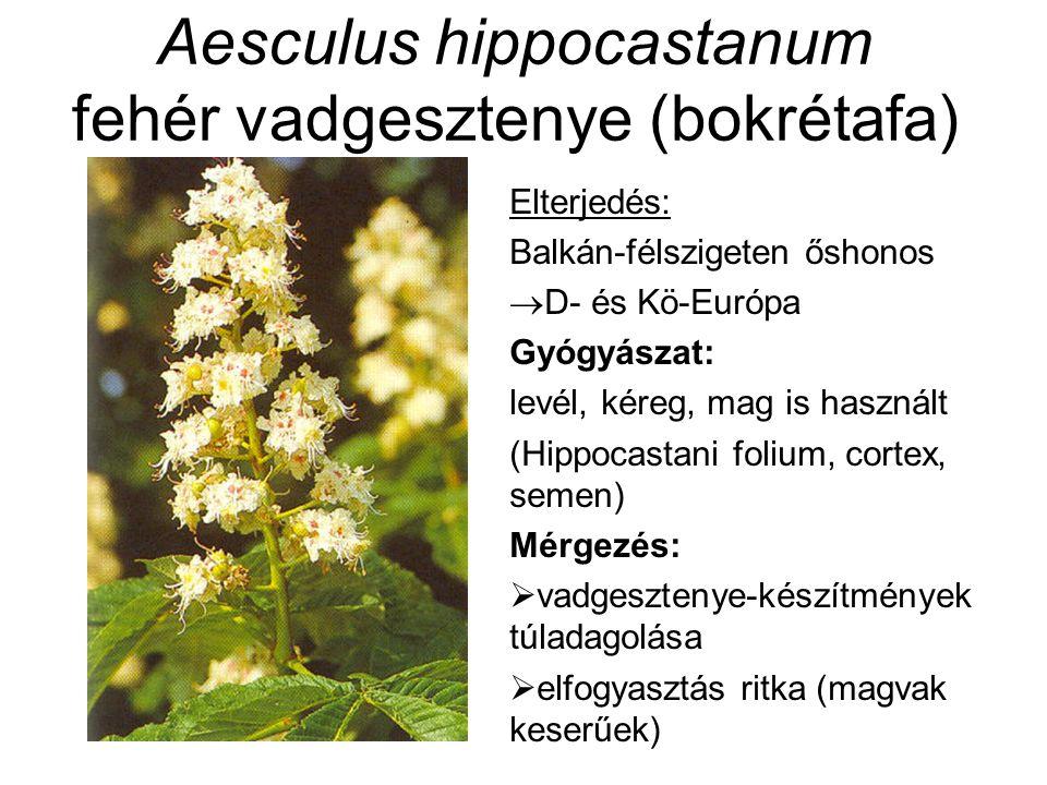 Elterjedés: Balkán-félszigeten őshonos  D- és Kö-Európa Gyógyászat: levél, kéreg, mag is használt (Hippocastani folium, cortex, semen) Mérgezés:  va
