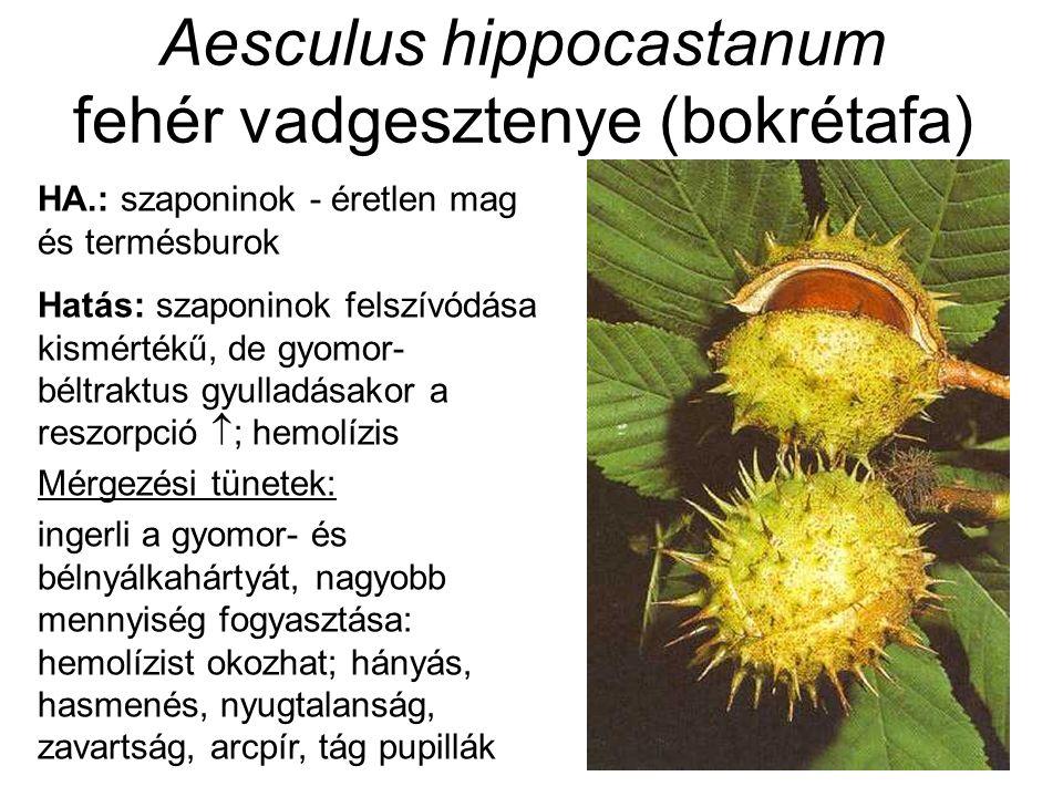 Aesculus hippocastanum fehér vadgesztenye (bokrétafa) HA.: szaponinok - éretlen mag és termésburok Hatás: szaponinok felszívódása kismértékű, de gyomor- béltraktus gyulladásakor a reszorpció  ; hemolízis Mérgezési tünetek: ingerli a gyomor- és bélnyálkahártyát, nagyobb mennyiség fogyasztása: hemolízist okozhat; hányás, hasmenés, nyugtalanság, zavartság, arcpír, tág pupillák