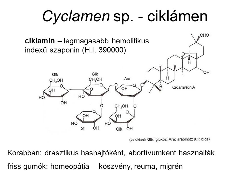 Cyclamen sp. - ciklámen Korábban: drasztikus hashajtóként, abortívumként használták friss gumók: homeopátia – köszvény, reuma, migrén ciklamin – legma