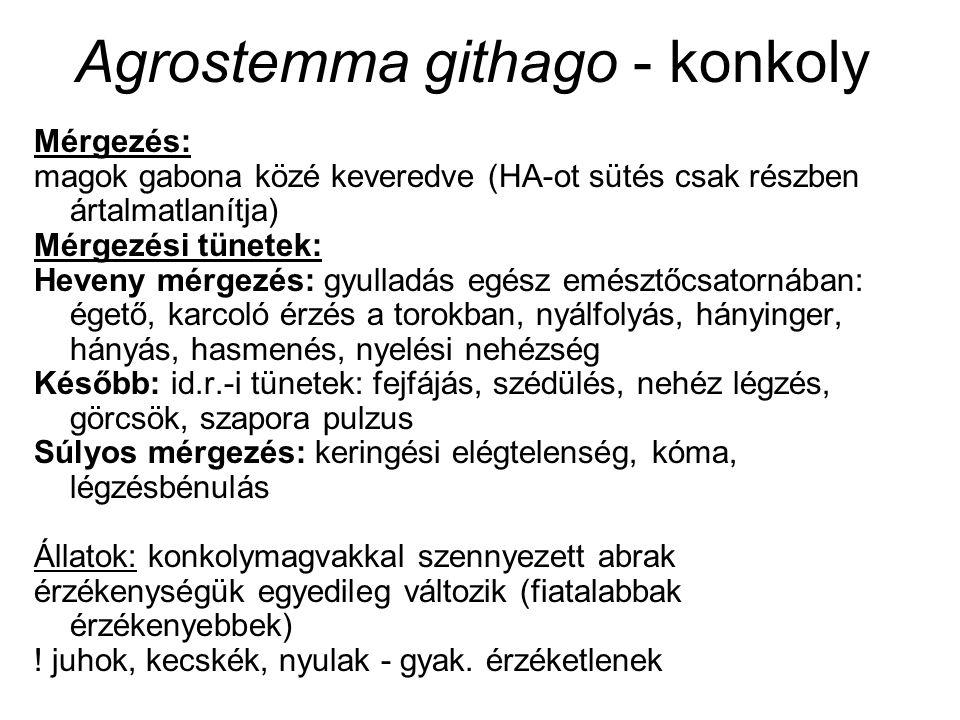Agrostemma githago - konkoly Mérgezés: magok gabona közé keveredve (HA-ot sütés csak részben ártalmatlanítja) Mérgezési tünetek: Heveny mérgezés: gyul