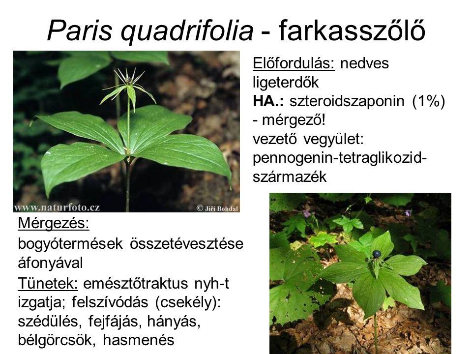 Paris quadrifolia - farkasszőlő Előfordulás: nedves ligeterdők HA.: szteroidszaponin (1%) - mérgező.