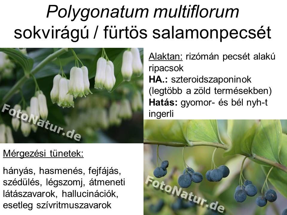 Polygonatum multiflorum sokvirágú / fürtös salamonpecsét Alaktan: rizómán pecsét alakú ripacsok HA.: szteroidszaponinok (legtöbb a zöld termésekben) Hatás: gyomor- és bél nyh-t ingerli Mérgezési tünetek: hányás, hasmenés, fejfájás, szédülés, légszomj, átmeneti látászavarok, hallucinációk, esetleg szívritmuszavarok