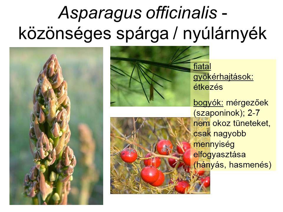Asparagus officinalis - közönséges spárga / nyúlárnyék fiatal gyökérhajtások: étkezés bogyók: mérgezőek (szaponinok); 2-7 nem okoz tüneteket, csak nagyobb mennyiség elfogyasztása (hányás, hasmenés)