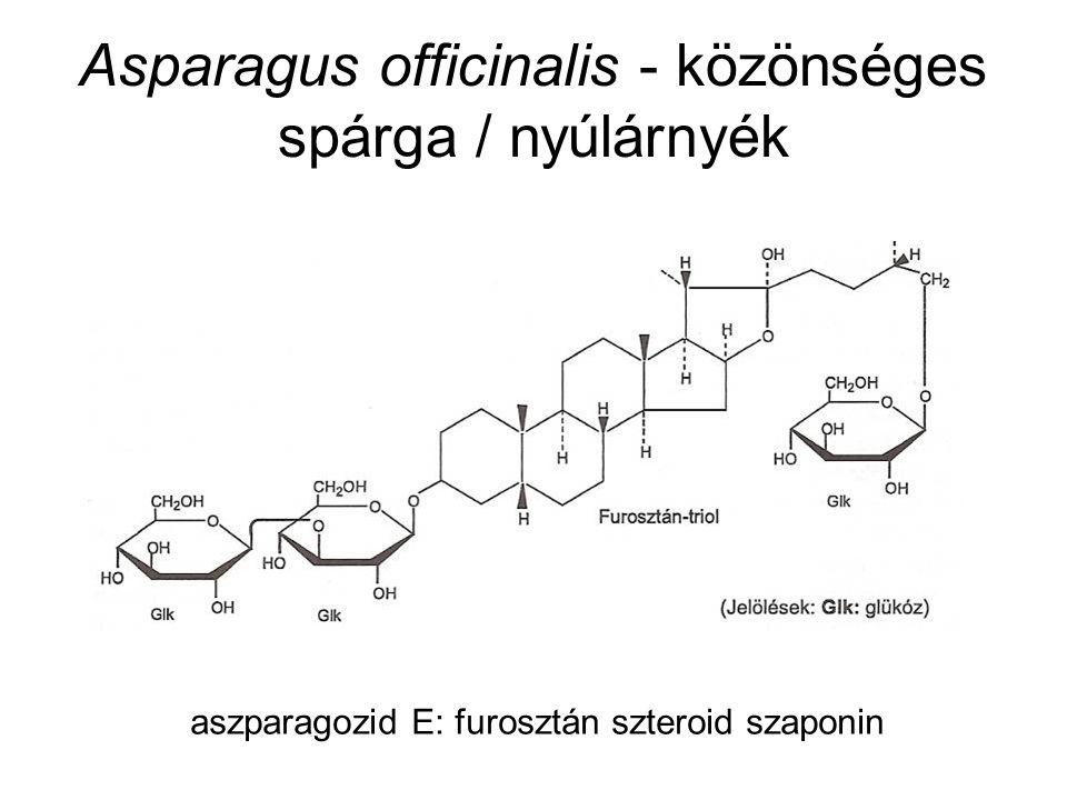 Asparagus officinalis - közönséges spárga / nyúlárnyék aszparagozid E: furosztán szteroid szaponin