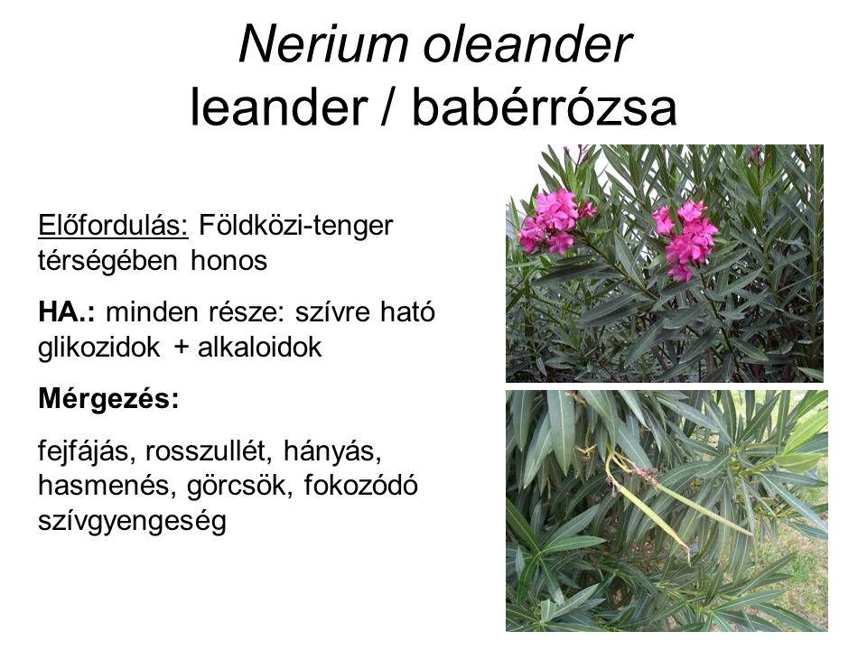 Nerium oleander leander / babérrózsa Előfordulás: Földközi-tenger térségében honos HA.: minden része: szívre ható glikozidok + alkaloidok Mérgezés: fejfájás, rosszullét, hányás, hasmenés, görcsök, fokozódó szívgyengeség