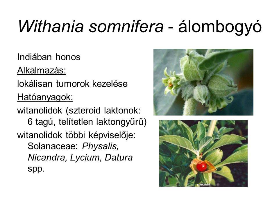 Withania somnifera - álombogyó Indiában honos Alkalmazás: lokálisan tumorok kezelése Hatóanyagok: witanolidok (szteroid laktonok: 6 tagú, telítetlen laktongyűrű) witanolidok többi képviselője: Solanaceae: Physalis, Nicandra, Lycium, Datura spp.