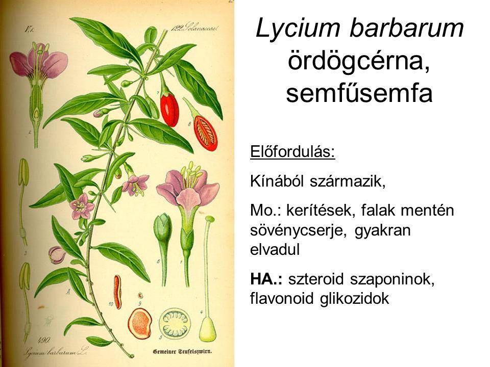 Lycium barbarum ördögcérna, semfűsemfa Előfordulás: Kínából származik, Mo.: kerítések, falak mentén sövénycserje, gyakran elvadul HA.: szteroid szaponinok, flavonoid glikozidok