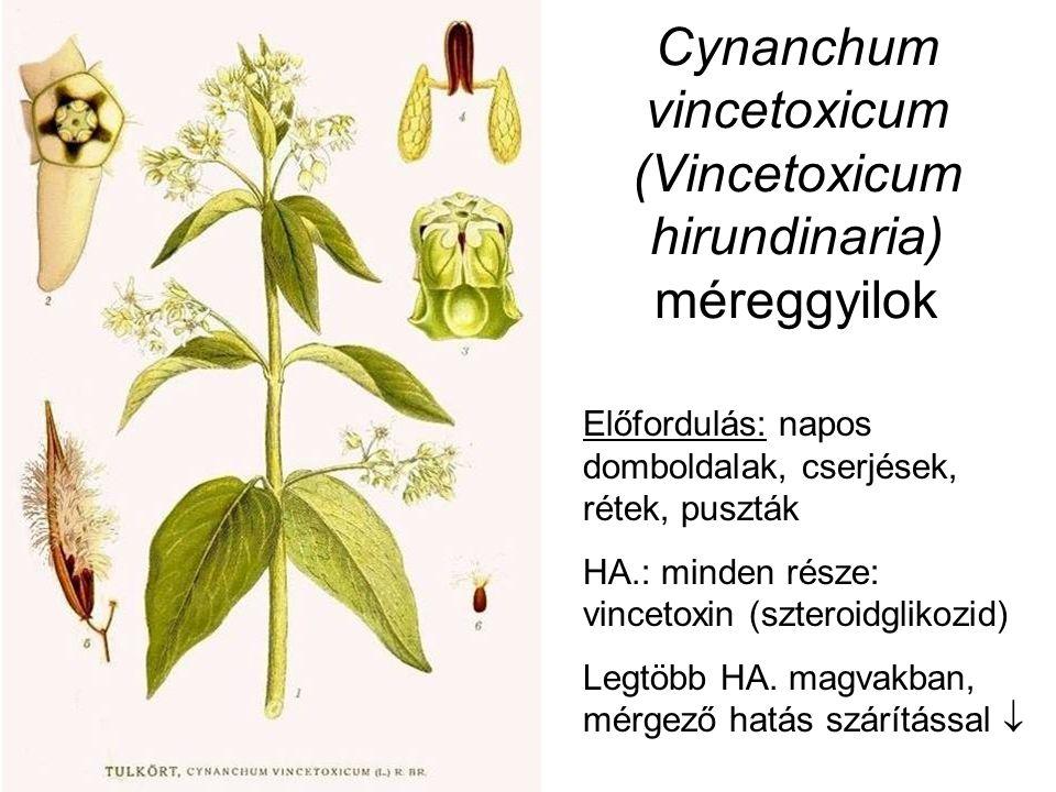 Cynanchum vincetoxicum (Vincetoxicum hirundinaria) méreggyilok Előfordulás: napos domboldalak, cserjések, rétek, puszták HA.: minden része: vincetoxin