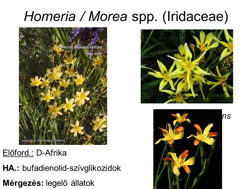 Homeria / Morea spp. (Iridaceae) M. comptonii M. elegans Előford.: D-Afrika HA.: bufadienolid-szívglikozidok Mérgezés: legelő állatok