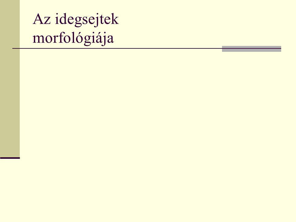 Az idegsejtek morfológiája