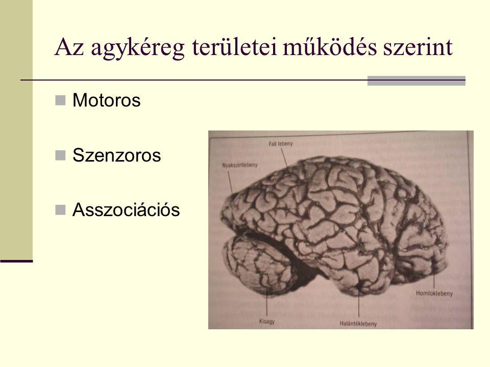 Az agykéreg területei működés szerint Motoros Szenzoros Asszociációs
