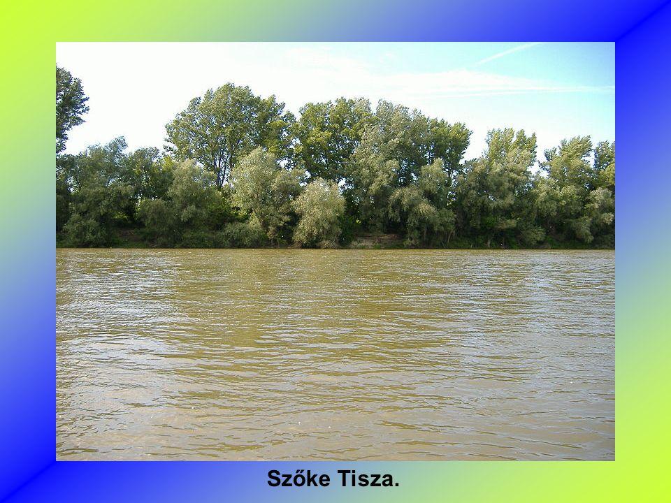 Tisza Szegednél