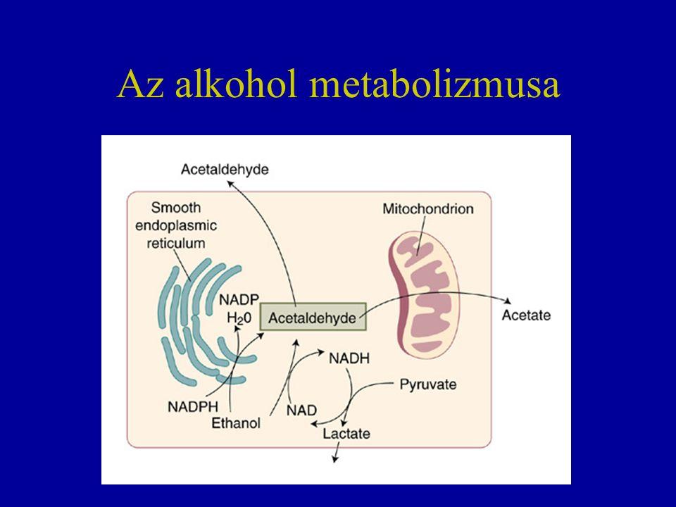 Az alkohol metabolizmusa