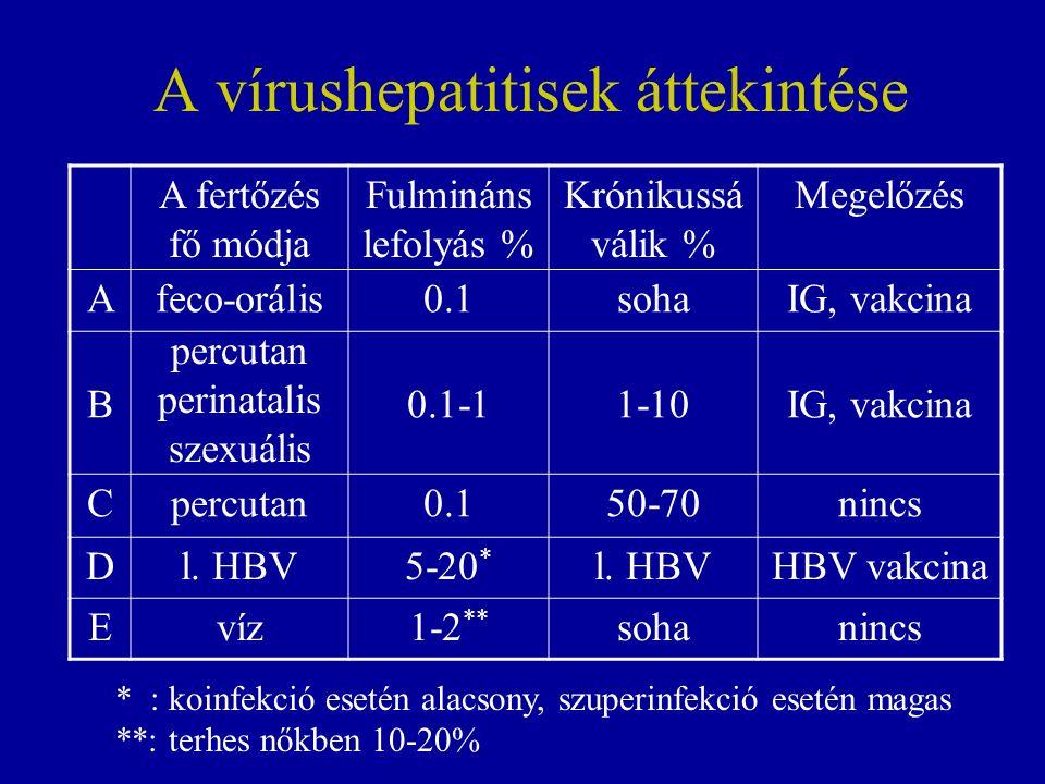 A vírushepatitisek áttekintése A fertőzés fő módja Fulmináns lefolyás % Krónikussá válik % Megelőzés Afeco-orális0.1sohaIG, vakcina B percutan perinatalis szexuális 0.1-11-10IG, vakcina Cpercutan0.150-70nincs Dl.