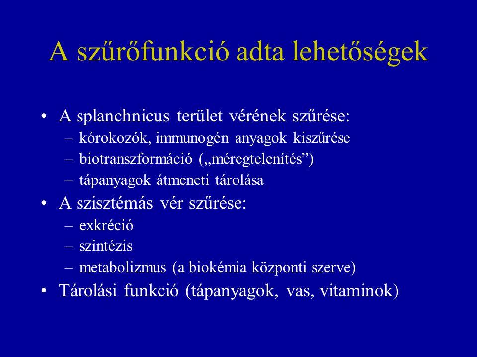 """A szűrőfunkció adta lehetőségek A splanchnicus terület vérének szűrése: –kórokozók, immunogén anyagok kiszűrése –biotranszformáció (""""méregtelenítés ) –tápanyagok átmeneti tárolása A szisztémás vér szűrése: –exkréció –szintézis –metabolizmus (a biokémia központi szerve) Tárolási funkció (tápanyagok, vas, vitaminok)"""