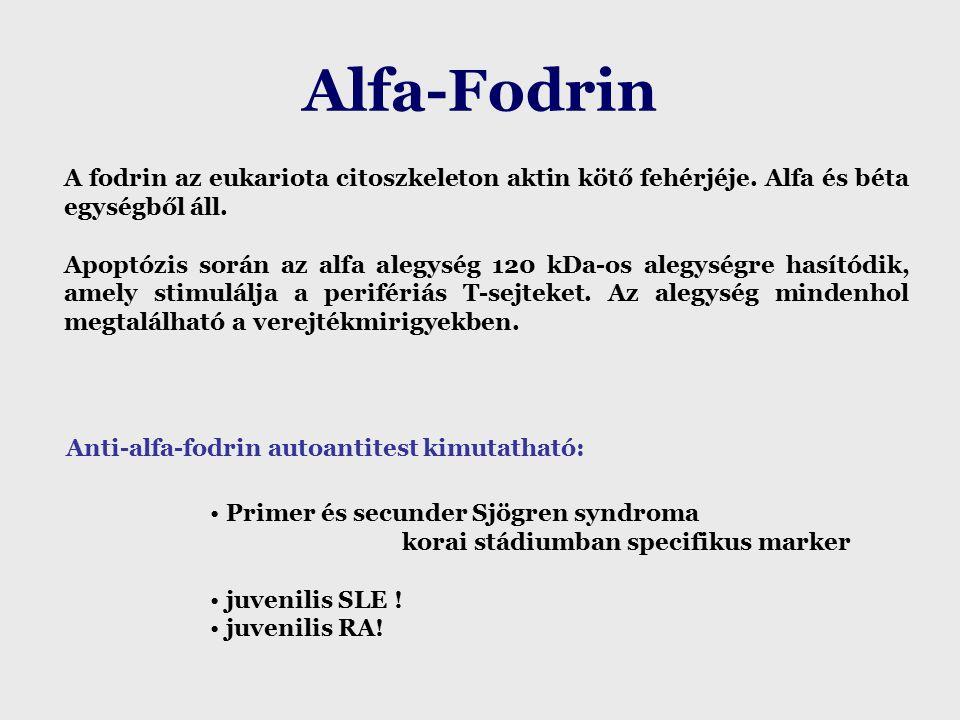Alfa-Fodrin A fodrin az eukariota citoszkeleton aktin kötő fehérjéje.