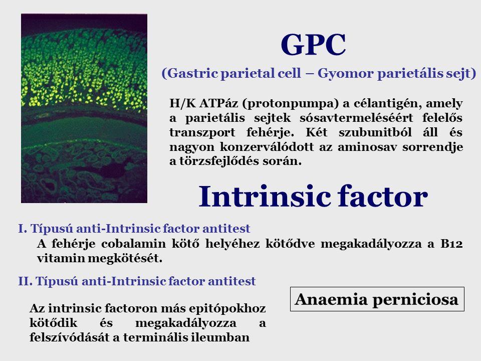 GPC (Gastric parietal cell – Gyomor parietális sejt)  H/K ATPáz (protonpumpa) a célantigén, amely a parietális sejtek sósavtermeléséért felelős transzport fehérje.