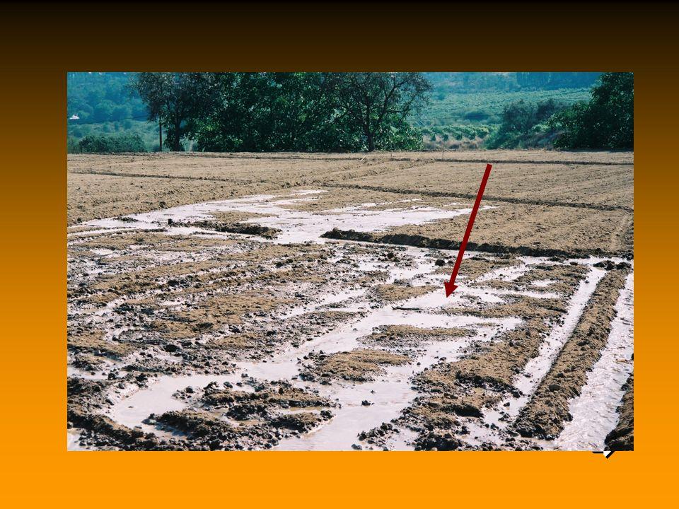 Ezt követően alaposan be kell öntözni a talajt, 30 mm öntözőző vízzel két egymást követő napon át.   Az öntözés (kép) feltétlenül szükséges a hőveze