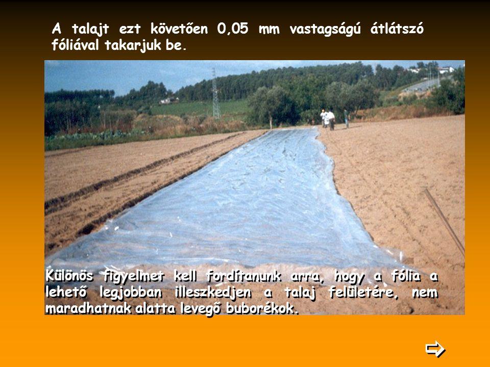 A talajt ezt követően 0,05 mm vastagságú átlátszó fóliával takarjuk be. Különös figyelmet kell fordítanunk arra, hogy a fólia a lehető legjobban illes