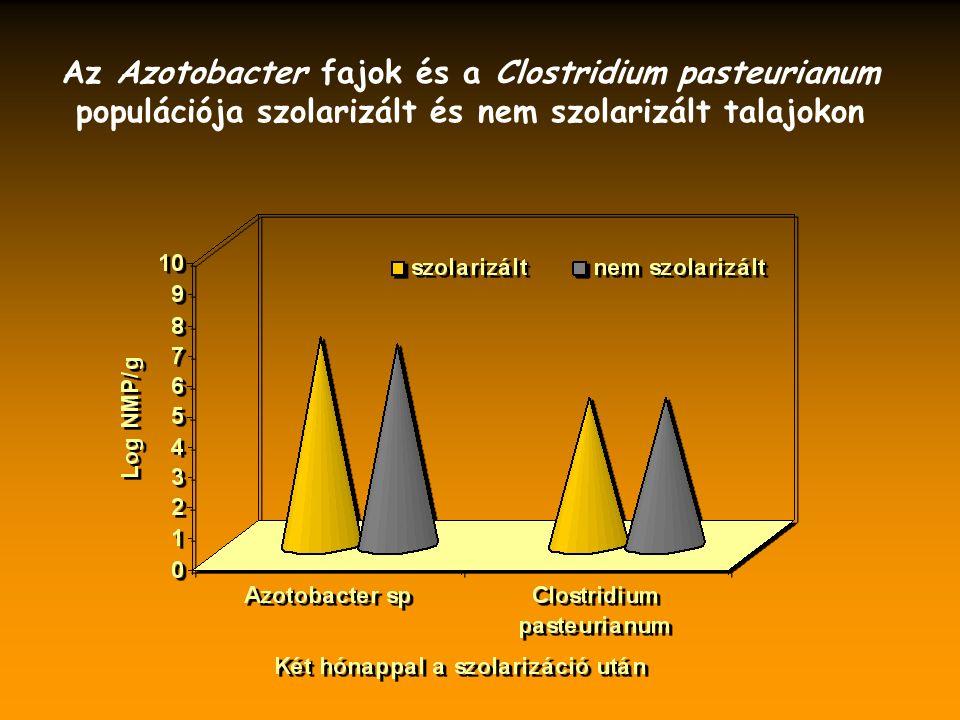 Az Azotobacter fajok és a Clostridium pasteurianum populációja szolarizált és nem szolarizált talajokon