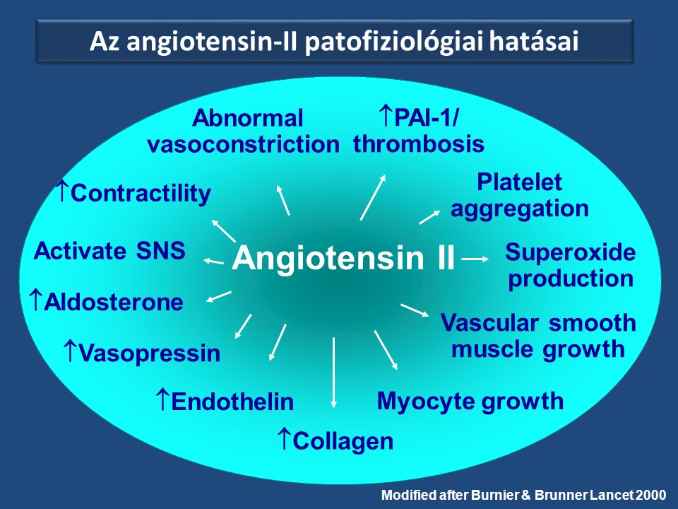 Angiotensin II Abnormal vasoconstriction Activate SNS  Aldosterone  Vasopressin  Collagen  Contractility  PAI-1/ thrombosis Platelet aggregation Superoxide production  Endothelin Vascular smooth muscle growth Myocyte growth Modified after Burnier & Brunner Lancet 2000 Az angiotensin-II patofiziológiai hatásai