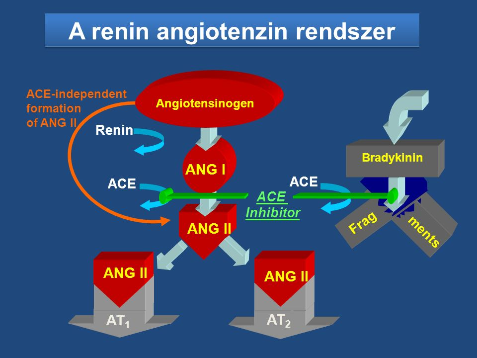 A renin angiotenzin rendszer ments Frag ACE Bradykinin Renin ACE ACE-independent formation of ANG II AT 1 ANG II AT 2 ANG II ANG I Angiotensinogen ACE Inhibitor
