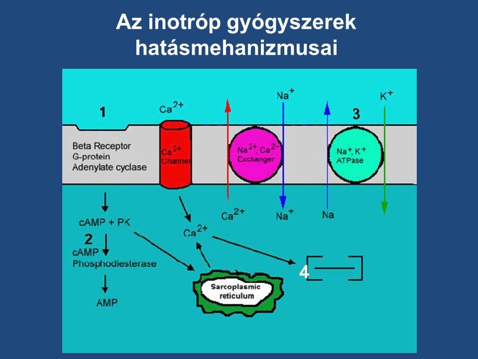 4 Az inotróp gyógyszerek hatásmehanizmusai