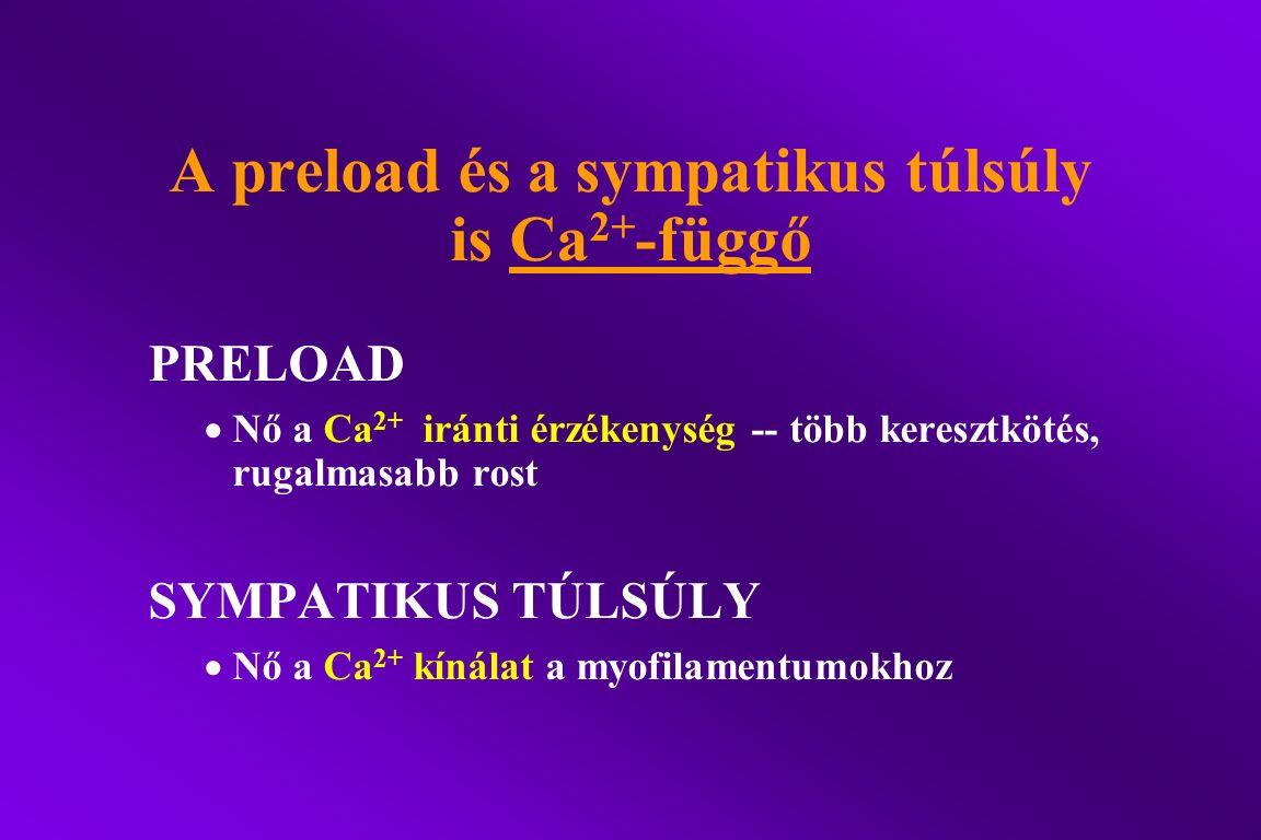 A preload és a sympatikus túlsúly is Ca 2+ -függő PRELOAD  Nő a Ca 2+ iránti érzékenység -- több keresztkötés, rugalmasabb rost SYMPATIKUS TÚLSÚLY 