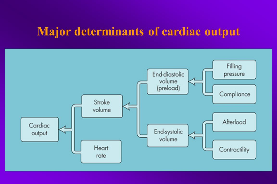 Major determinants of cardiac output